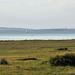Fertő tó Táj