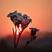 Ébredés Virág Ősz