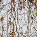 Őszi levelek Tél