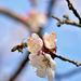 Tavasz Virág Méh