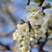 Tavasz Virágok