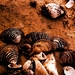 Kagylók a parton