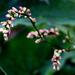 Erdei virágocska