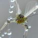 A kisbogár a harmatos pókháló ádozata lett