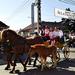 Szent György-napi Állatkihajtás Ünnepe 2012 - Túrkeve 104