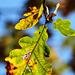 Autumn Leaf 0064