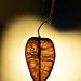 Autumn 0301