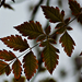 Autumn Leaves 0232