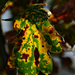 Autumn Leaves 0182