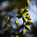 Autumn 0226