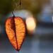 Autumn 0072