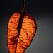 Autumn 0341