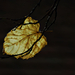 Autumn Leaf 0342