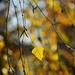 Autumn Leaves 0040