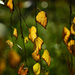 Autumn Leaves 0022