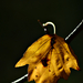 Autumn Leaf 0005