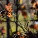 Autumn Leaves 0088