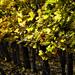 Autumn 0100