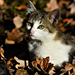 Autumn Cat 0018