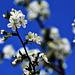 Spring 0036