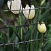 Spring 0046
