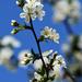Spring 0038