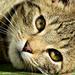Cat 0029
