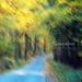 erdős indafoto 2048x1536 másolata