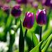 Tavaszváró - március (1)