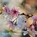 Tavaszváró - március (14)