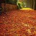 Leuvenbe beszökött az ősz