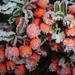 Album - növények, virágok