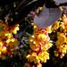 Virágfürtök