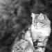 A macska visszanéz...