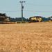 Kezdődhet az aratás