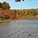 Mártélyi ősz