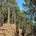 Erdőgazdaság