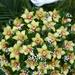 053. / 40 fejes - orchidea élővirág állókoszorú