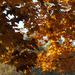 ősz 7