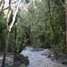 Tongariro Patak mentén