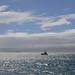 Wellington waterfrontról 02