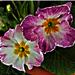 Gyűjtemény - virágok