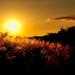 árvalányhaj naplementében