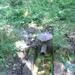 GePaRdLaCeE: P9120639 (Custom) - indafoto.hu