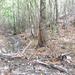 GePaRdLaCeE: P9300972 (Egyedi) - indafoto.hu