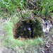 GePaRdLaCeE: P8130179 (Egyedi) - indafoto.hu