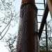 GePaRdLaCeE: DSC 4661 (Egyedi) - indafoto.hu