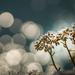 Album - Garda tó