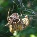 Pók és zsákmánya