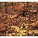 Őszi erdő - színes ceruzarajz